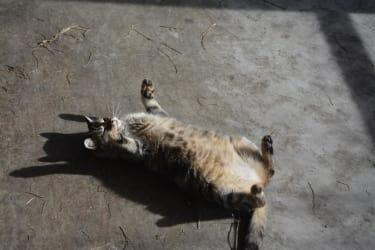 Biohof Haunschmid-Hexi unsere Katze