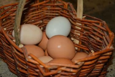 Biohof Haunschmid-Eier von glücklichen Hühnern