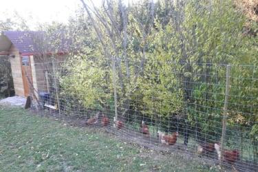 Biohof Haunschmid-Hühnergehege