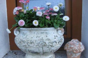 Weinpension Andrea - Frühlingsblumen