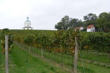 Wein & Urlaub Lobner - Weingarten am Rochusberg