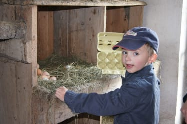 Eier abnehmen