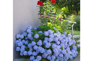 Artner Naturpension - Blütenpracht