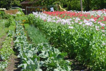 Biomohn und Gemüse
