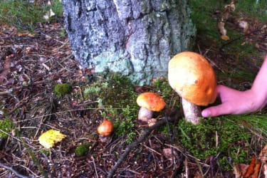 Pilze gleich vor dem Haus