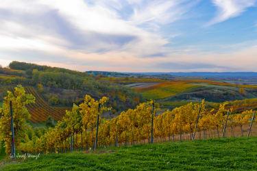 Heuriger und Gästezimmer Weingut Burger - unsere Weingärten