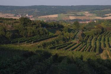 Glaubendorf-Weinberge