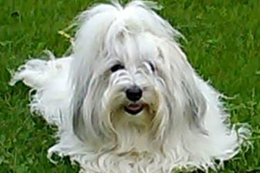 Amanda unser Hund
