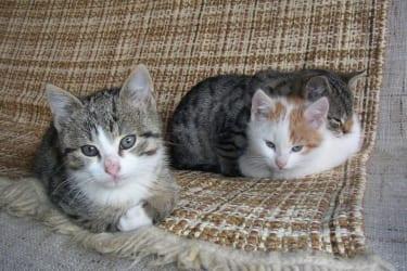 Katzen im Hause Wagner