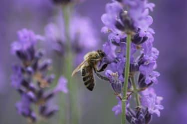 Zum alten Forsthaus - Fleißige Biene