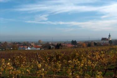 Weingärten rund um Straning