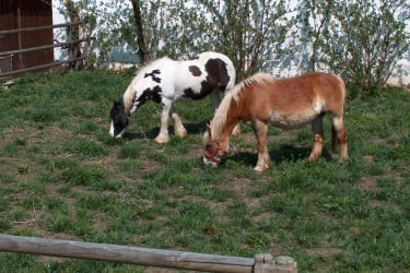 Pferde auf der Gästekoppel