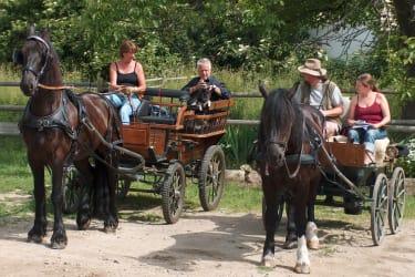 Pferdekutschenfahrer