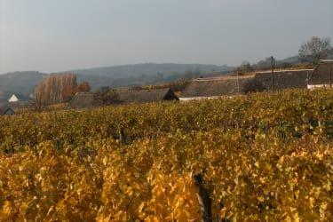 Weingarten hinter Kellergasse