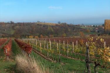 Weingarten Gaisberg