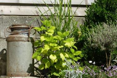 Traubengarten Winkler - Liebevolle Details in und rund um das Haus