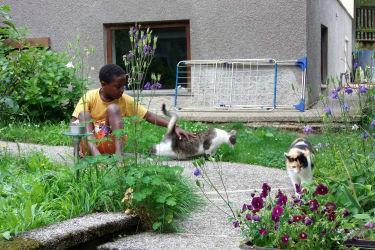 Sohn unserer Gäste beim Spiel mit Katzen