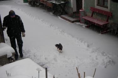 Unser Innenhof im Winter(mit neugieriger Katze)