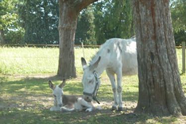 Mali im Mutterglück