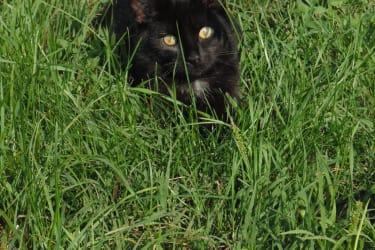 Charly spielt gerne mit allem was sich bewegt. Vorsicht -manchmal fährt sie während des Spielens unvermittelt ihre Krallen aus!  l