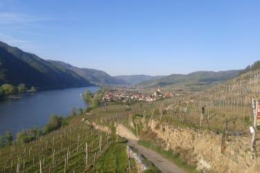 Blick von unserem Weingarten auf Weissenkirchen