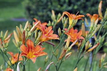 Gästehaus Punz - Blumen im Garten