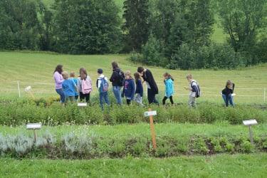 Höchbauer - Führung im Kräutergarten