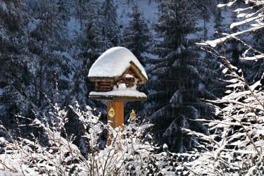 Der Vorgarten im Winter