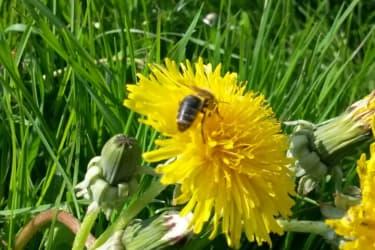 Die fleißigen Bienen