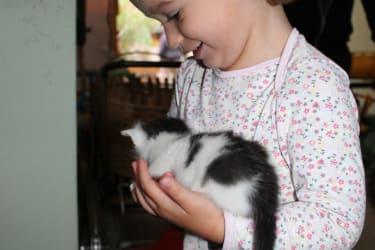 Luisa die Katzenmama