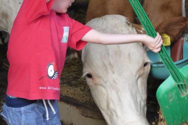 mit Kuh auf du und du