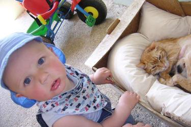 Katzenbabys werden begutachtet