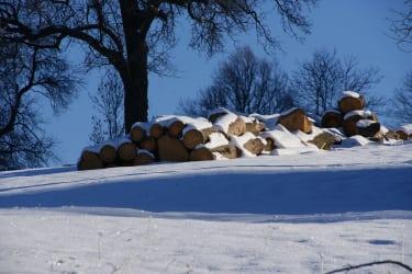 Verschneites Holz