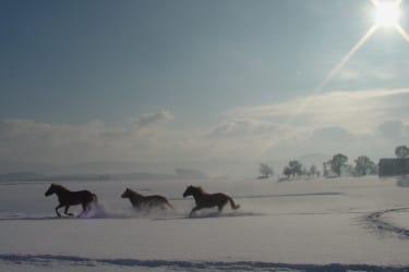 Toben im Schnee!