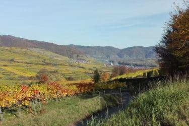 Wanderweg bei Weißenkirchen in d. Wachau