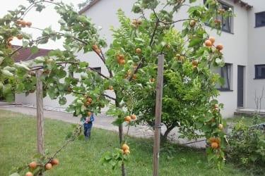 Bio Frühstückspension Marillenhof - Garten