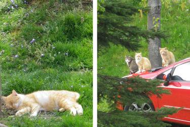 Wurzer -unsere Katzen (Bild: Familie Wurzer)