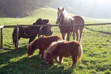 alle Ponys