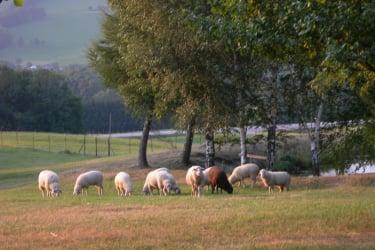 unsere Schafe sind ab jetzt beim Nachbarn untergebracht