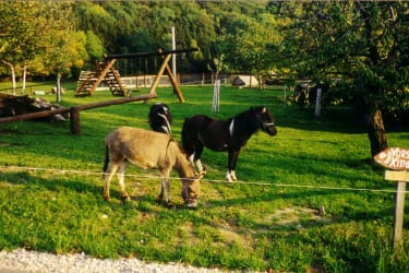 Forellenhof  Ponys am Spielplatz