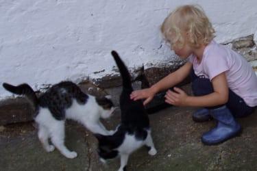 Unsere Katzen lieben alle