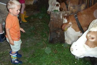 Die Kinder helfen Kühe füttern