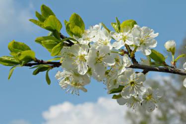 Frühling im Waldviertel