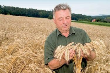 Bauer & Wirt Langthaler - Senior Franz - Kontrolle der Ernte