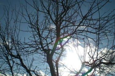 Sonne durch Baum
