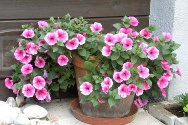 Blumen auf der Terasse