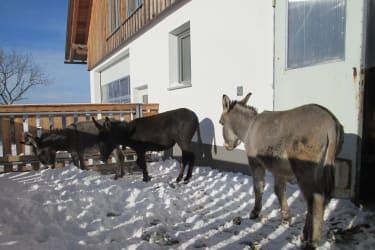 Ötscherblick Familie Winter - Eselfamilie (© Winter Angelika)