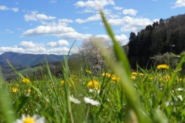 Wunderschöne Frühlingsblumenwiese