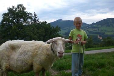 Mecki unser Schaf