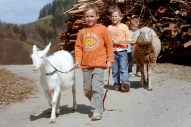 Zwergerlhof - Ihr koennt mit den Schafen oder Ziegen spazieren gehen. Manches mal sind sie brav, manches mal stur und nicht zum Weiterbewegen.